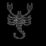 Скорпион - Scorpio 24 октября – 22 ноября